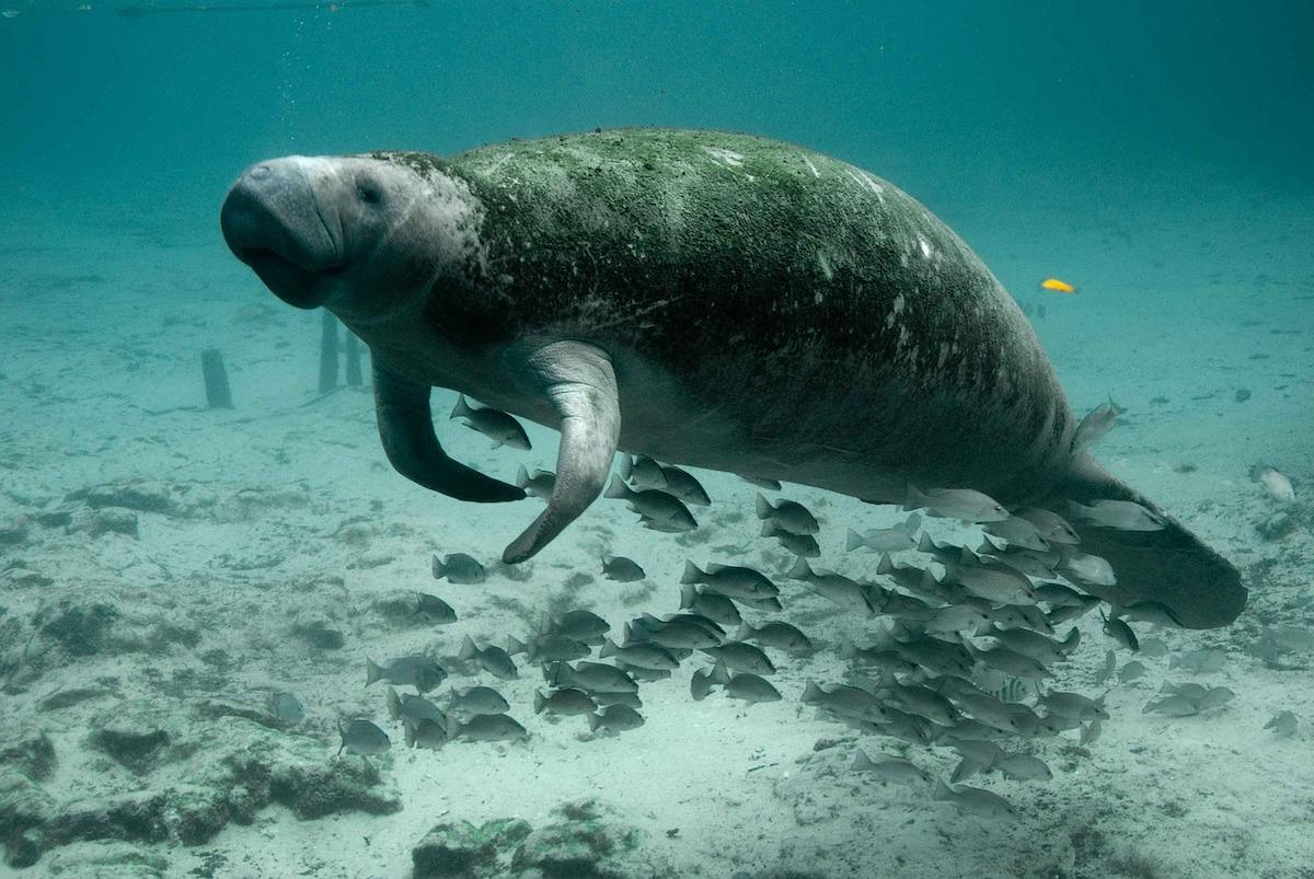 Zeekoe langzaamste dieren