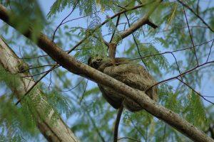 Camouflage luiaard