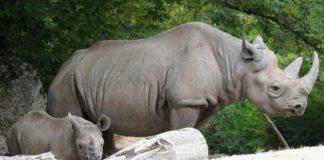 Grootste dieren op het land