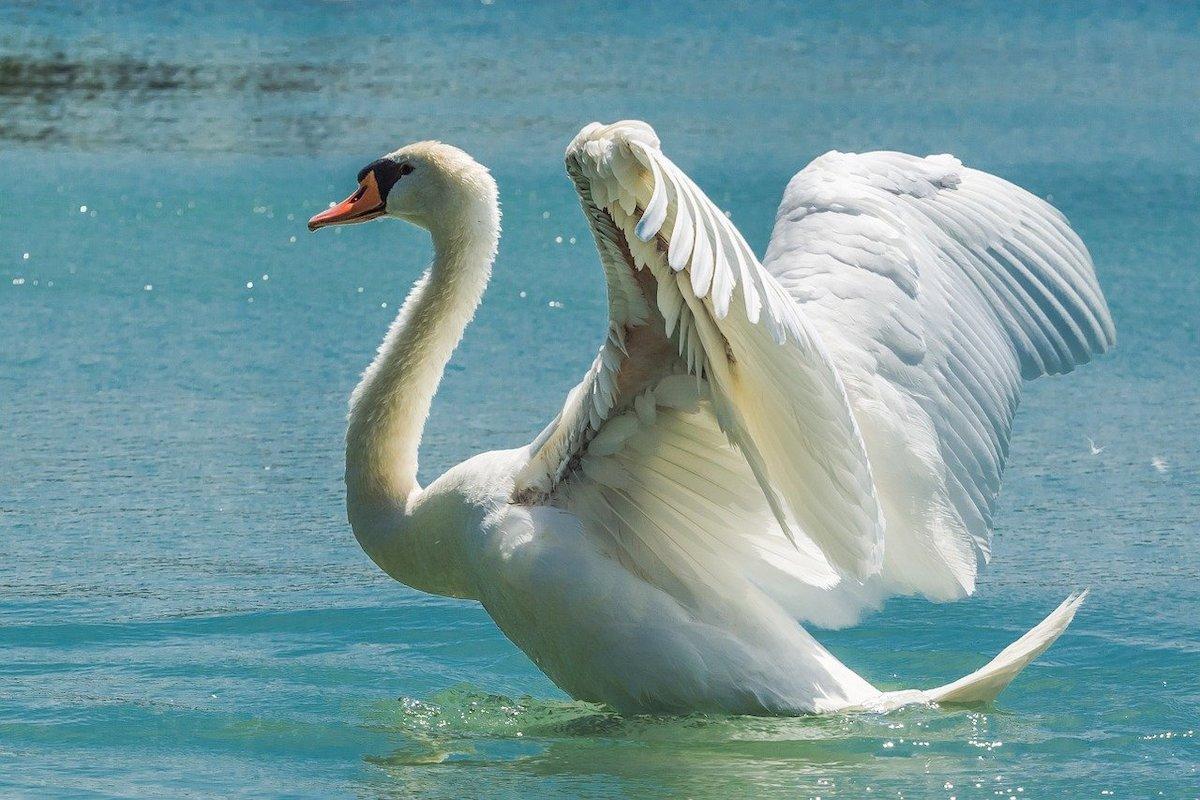 Zwaarste vogels ter wereld