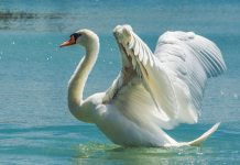 Grootste vogels ter wereld