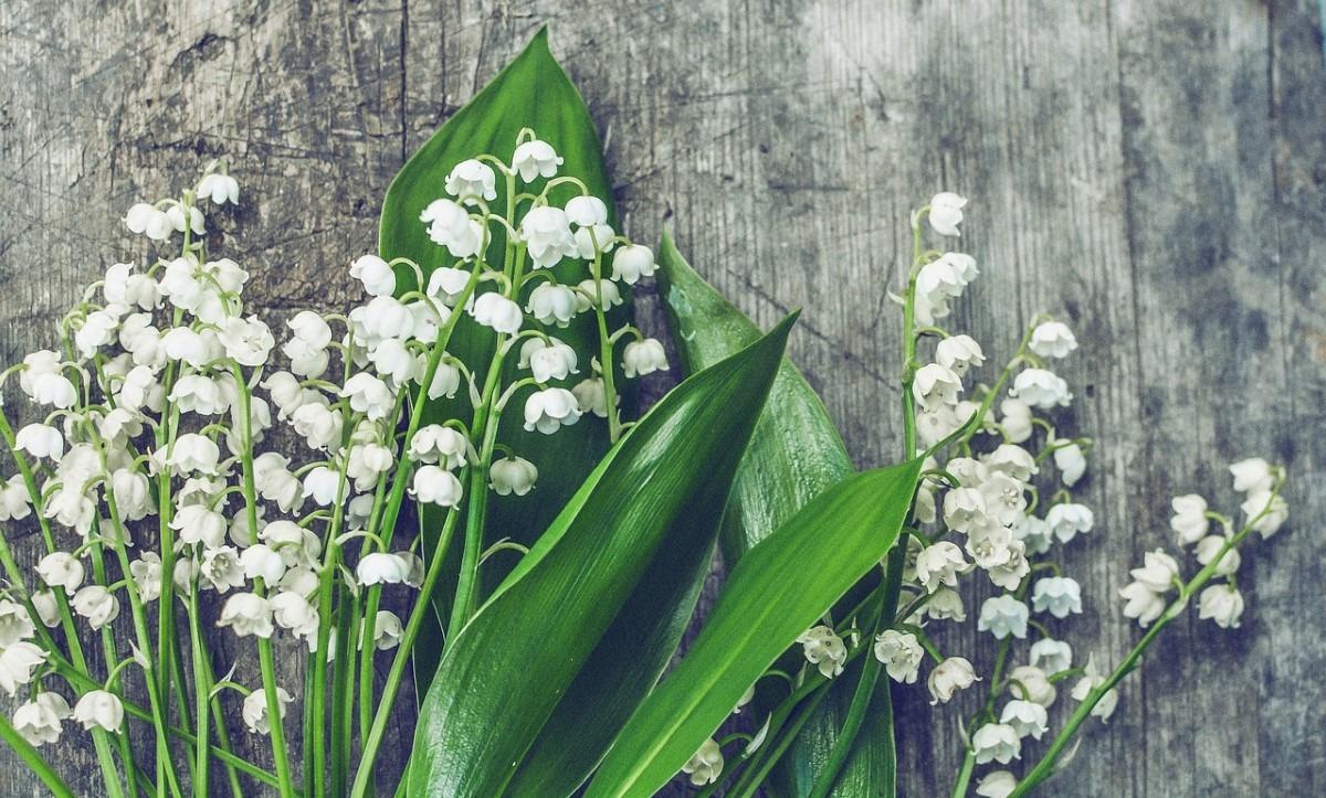 populaire bloemen voor een bruidsboeket