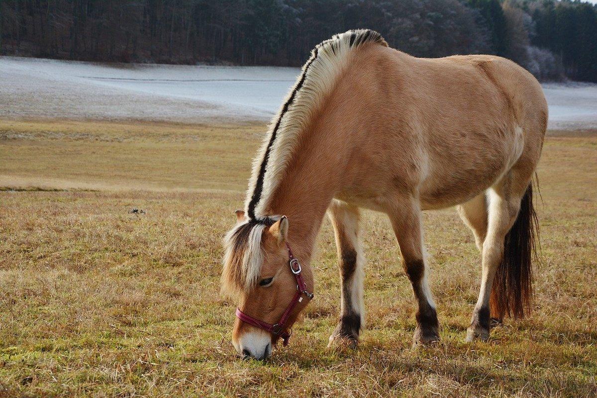 Mooiste paardenrassen
