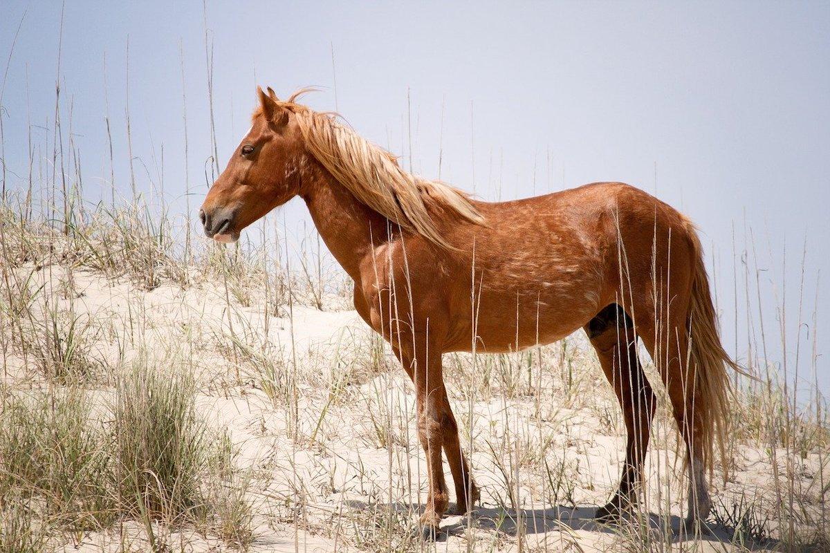 Paardenrassen top 10