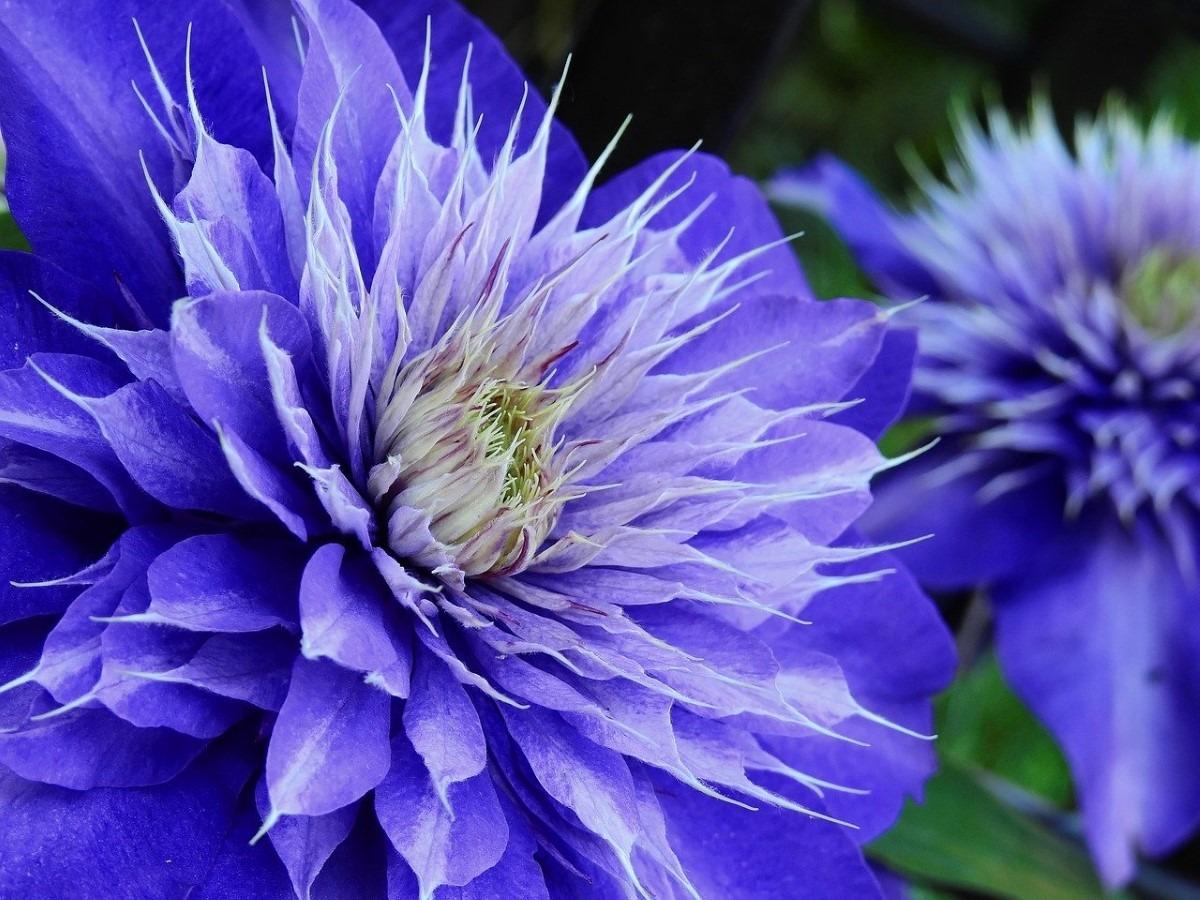 Planten met blauwe bloemen