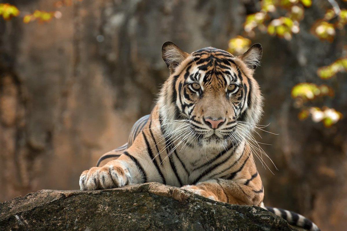 Sterkste dieren ter wereld