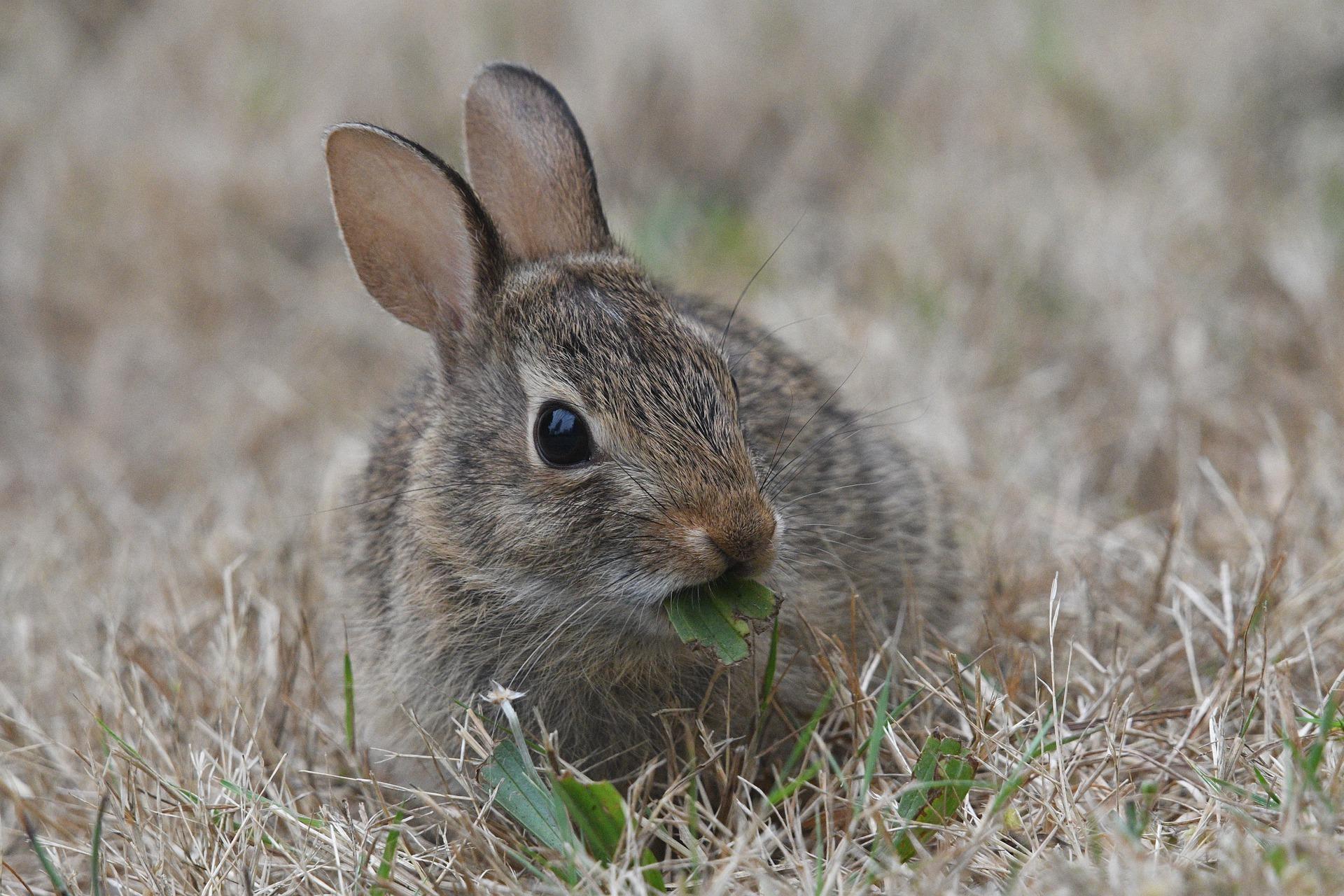 Beste hooi konijn