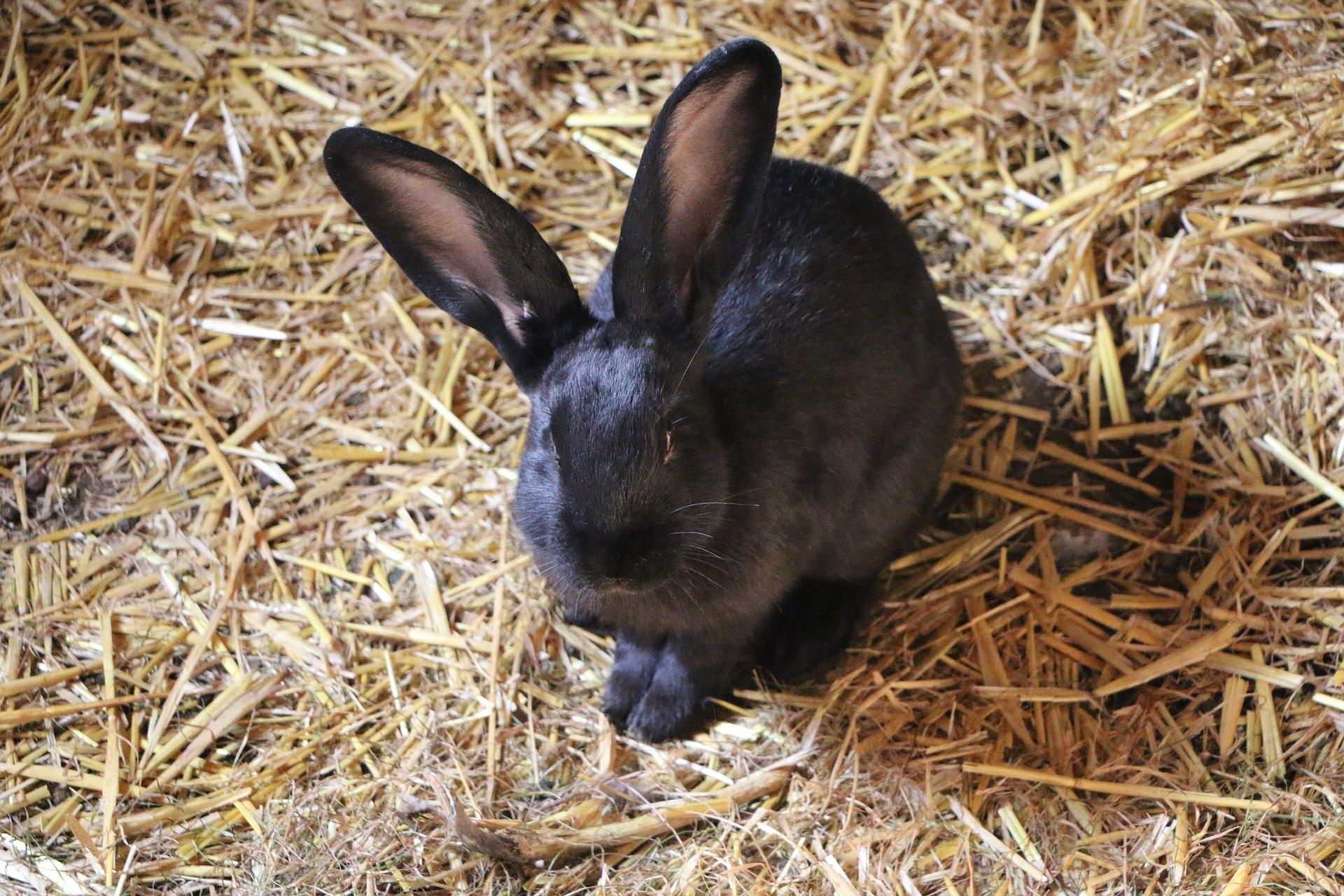 Hooi voor konijn